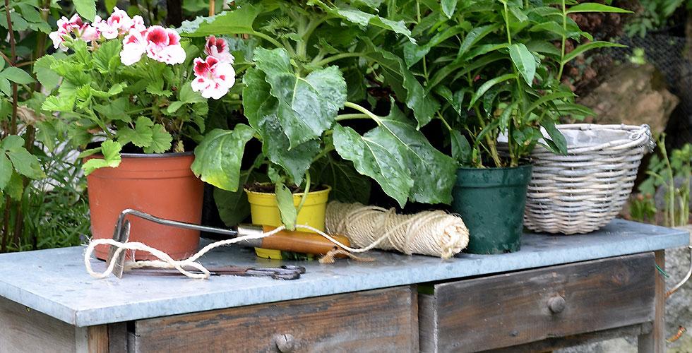 Tisch mit Pflanzen