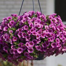 Blumen Ampel