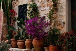 Pflanze im Topf oder Kasten als Sichtschutz oder Raumteiler