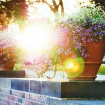 Blumentopf und Pflanzenkübel
