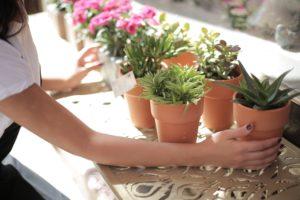 Fazit Blumentopf Pflanzenkübel