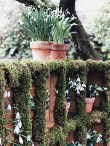 Der Richtige Blumentopf Und Pflanzenkubel Gartentest Com