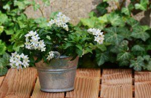 Zink Blumentopf Pflanzenkübel