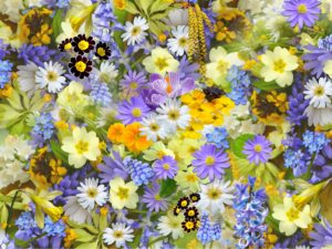 Blumen Gartengestaltung blühen