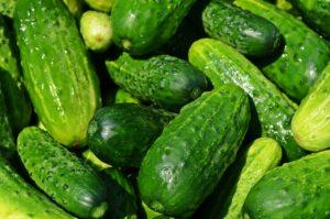 cucumbers Gurke Gewächshaus