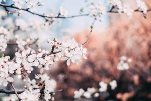 Pflanzen die Mehrjährig blühen